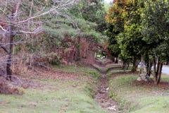 Wald mit einem Hinterbaum lizenzfreies stockbild