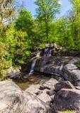 Wald mit einem Wasserfall Stockbilder