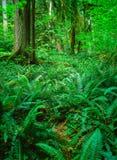 Wald mit Farn stockbild