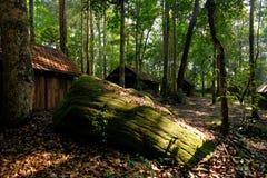 Wald mit geradem Licht vom Himmel lizenzfreie stockfotos