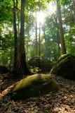 Wald mit geradem Licht vom Himmel stockfoto