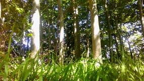 Wald mit grünem Gras Stockbilder