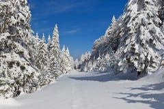 Wald mit Kiefern im Winter Stockfotografie