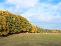 Wald mit Laub im Herbst Stockbilder