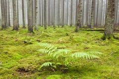 Wald mit Morgennebel Stockfotografie