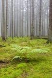 Wald mit Morgennebel Lizenzfreies Stockbild