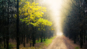 Wald mit Nebel Lizenzfreies Stockbild