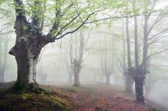 Wald mit Nebel und Fußweg Stockbilder