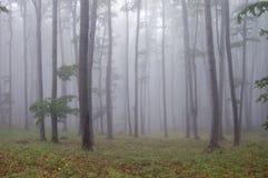 Wald mit Nebel und grünem Gras Lizenzfreie Stockfotos