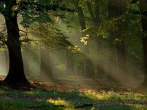 Wald mit Nebel und warmem Sonnenschein Stockfoto
