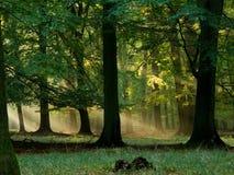 Wald mit Nebel und warmem Sonnenschein Lizenzfreie Stockfotografie