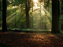 Wald mit Nebel und warmem Sonnenschein Lizenzfreies Stockbild