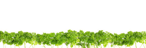 Wald mit parsely Lizenzfreies Stockbild