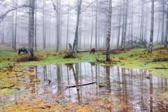 Wald mit Pfütze und Pferden Stockfotos