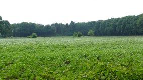 Wald mit potatoe Anlagen in der Front stockbild