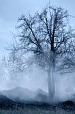 Wald mit Rauche Lizenzfreie Stockfotos