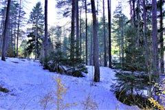 Wald mit Schnee Lizenzfreie Stockbilder