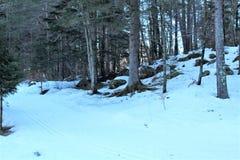 Wald mit Schnee Lizenzfreie Stockfotografie