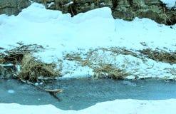 Wald mit Schnee Lizenzfreies Stockfoto