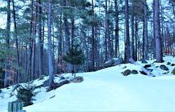 Wald mit Schnee Stockfoto