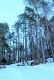 Wald mit Schnee Stockfotografie