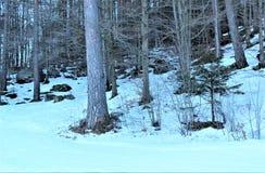 Wald mit Schnee Lizenzfreies Stockbild