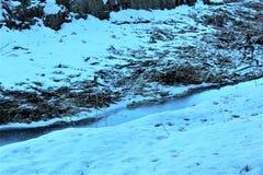 Wald mit Schnee Lizenzfreie Stockfotos