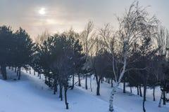 Wald mit Schnee in Erzurum, Truthahn lizenzfreie stockfotografie