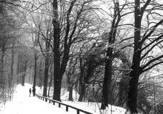 Wald mit Schnee im Winter lizenzfreie stockbilder