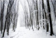 Wald mit Schnee, Nebel und gefrorenen Bäumen Stockbilder