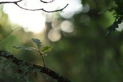 Wald mit Sonnenlicht, Naturhintergrund im Freien stockfotografie