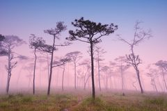 Wald mit Sonnenuntergang Lizenzfreies Stockfoto