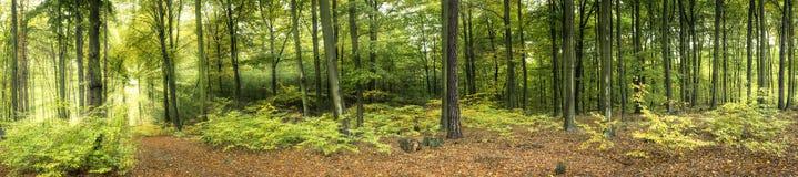 Wald mit Sonnestrahlen Lizenzfreie Stockfotografie