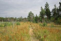 Wald mit trockenen Bäumen, Gras und Marschland Stockfoto