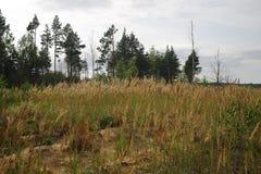 Wald mit trockenen Bäumen, Gras und Marschland Stockbild