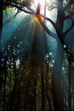Wald mit volumetrischer Beleuchtung im Sonnenaufgang Stockfotos