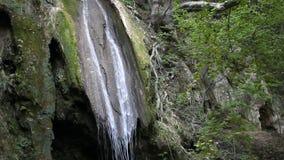 Wald mit Wasserfall stock video footage