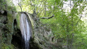 Wald mit Wasserfall stock footage