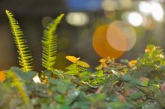 Wald morgens Stockfotografie