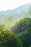 Wald morgens Stockbilder