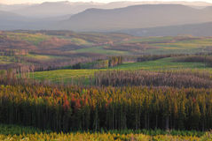 Wald nach dem Feuer Stockbilder