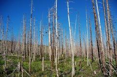 Wald nach Feuer Stockfotos