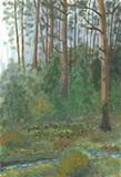 Wald nach Regen Lizenzfreie Stockfotografie