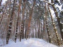 Wald nach Schneefällen Stockfoto