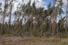 Wald nach Sturm Stockfoto