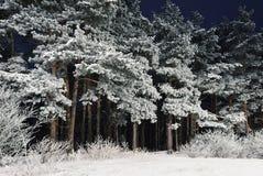 Wald nachts Stockfotos