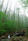 Wald nahe Atlanta Stockfotos