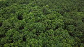Wald nahe Boston Vogelperspektive vom Brummen 4K stock footage