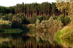 Wald nahe dem See Stockfotos