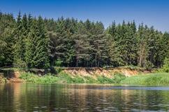 Wald nahe dem See Stockbild